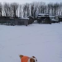 ラン内はまだきれいな雪✨