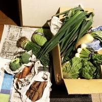 湘南野菜と苗