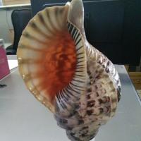 法螺貝作りました。