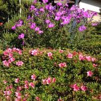 庭のところどころで花が咲いています。
