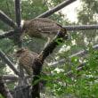 鳥の楽園@天王寺動物園
