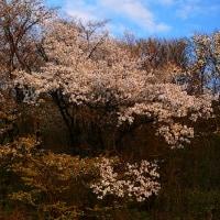春の景色(家の近所)