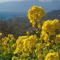 早春の色と香り