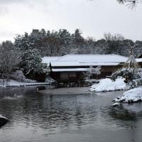 雪の日に散歩
