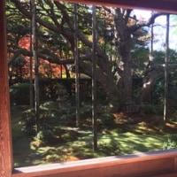 額縁庭園〜お抹茶をいただきながら〜