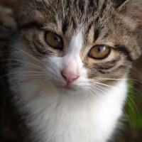 比治山の猫223