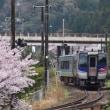 桜と列車(土讃線)