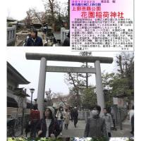 花巡り 「桜-その392」 花園稲荷神社 上野恩賜公園