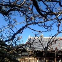 仏教婦人会世話人会(28年度)