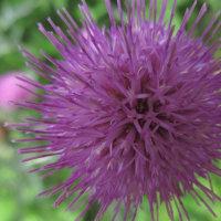 初夏に歩く道 キュウイの花は香り豊かに色とりどりの草花に囲まれて