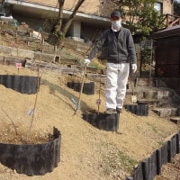 斜面に土留めをして桃の苗を植える