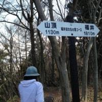 角田山の雪割草とカタクリ・ほたるの里コース
