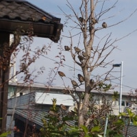 高知市にも雪は降るか?