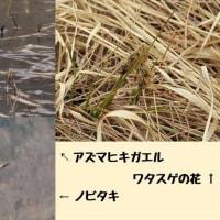 戦場ヶ原春のガイドウォーク実施報告