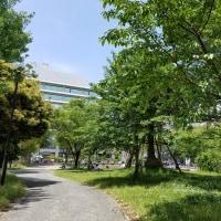 823.博多 緑の公園