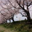 桜の下で昼食を・・・