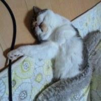 猫ちゃんの思い出ー飼い猫の生き様