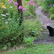黒猫の庭地方も梅雨明け~♪
