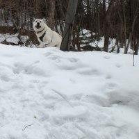 雪の節句 いただき写真