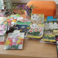 春の花 水仙 ラナンキュラス チューリップなど配置?デザインを考えるだけでも楽しい・・・夢見る花おばさん?