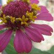 夏の花 P2