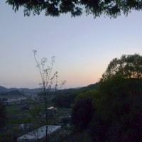 春の楽しみ 山桜が散って八重桜が満開です