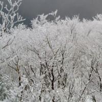 関西にもこんな素晴らしい霧氷を見ることが出来るスポットがある! 奈良県と三重県の境にある高見山
