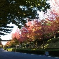 栗駒山登山9月23日