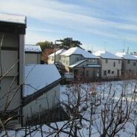 初氷 季節先取り 願い下げ - 11月は初体験です