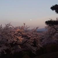 2017 桜。
