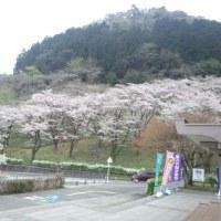 津久井湖センターは桜も盛り