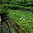 挑戦田舎暮らし 長年の休耕田をコスモス畑へ(その17)随分コスモス畑のようになってきました!