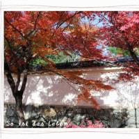 2016秋の大阪・京都旅⑥・・・嵐山・錦市場