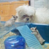 ハムスターと子犬