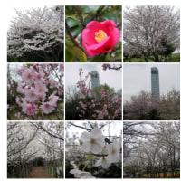 2008-03-30千葉ポートタワー公園