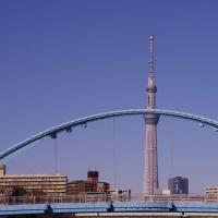 東京の一足早い桜