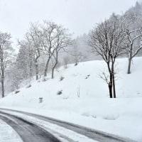 デコポンを食べるメジロと越後の雪景色