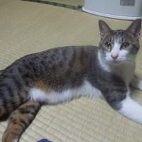 家内のお兄さんの奥さんが亡く成ったので京都に行きます