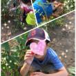 野菜収穫!🍅🥕