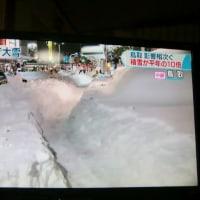 猛烈な雪の日本! 我が家梅咲く!