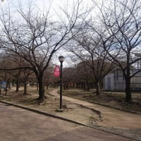 長居公園  梅と桜と