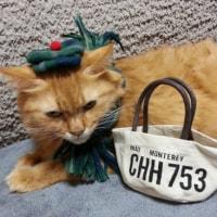 ポンちゃん、冬のお出掛けは♪ Handmade-57