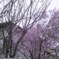 山形Q 練習日誌63-vol.14 (今井記)