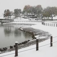 メモ帳682ページ目 都心での11月積雪は54年振り