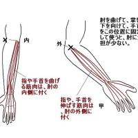 肘の痛み(外内側上顆炎)を取り去るには、、、     金沢市    整体    肩こり腰痛