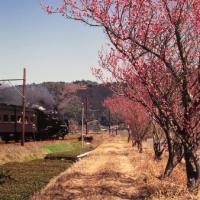 春の光景 大井川鐵道の蒸気機関車 1994-03-27