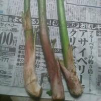 山菜の到来だ!