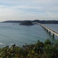 角島のダルマギク(山口へ)