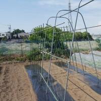 トマト2個目の畝作りました