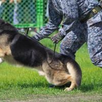 芦屋基地航空祭・警備犬展示  2016/10/9(日)